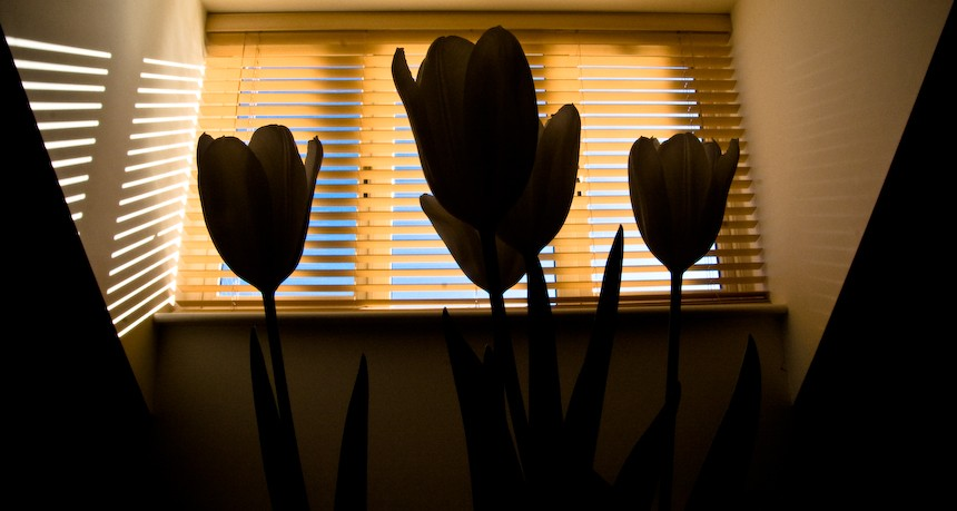 photoblog image window through the tulips